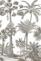 Palm Oasis II Framed Print