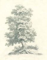 Tree Study II Fine Art Print