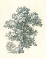 Tree Study I Framed Print