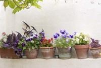 Attractive Flowers In Clay Pots Fine Art Print