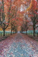 Autumn Country Lane Framed Print