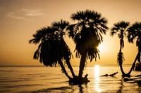 Sunrise On The Beach, Through The Palms Fine Art Print