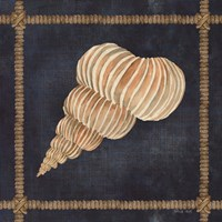 Seashell on Navy III Framed Print