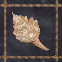 Seashell on Navy IV Framed Print