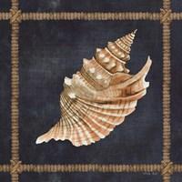Seashell on Navy V Framed Print