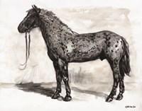 Horse Study 2 Framed Print