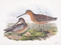 Goulds Coastal Bird VIII Framed Print