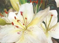 Macro Lilies Fine Art Print