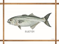 Bluefish on White Framed Print