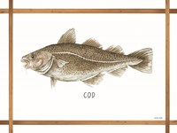 Cod on White Framed Print