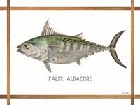 False Albacore on White Framed Print