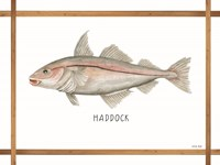 Haddock on White Framed Print