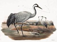 Goulds Coastal Bird VII Framed Print