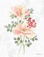 Floral Focus VIII Framed Print