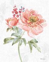 Floral Focus VI Framed Print