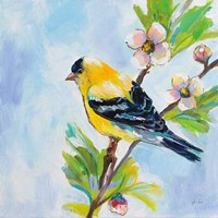 Golden Finch Fine Art Print