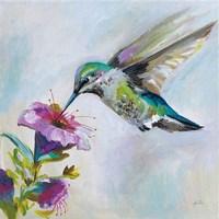 Hummingbird II Framed Print