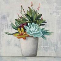 Succulent Still Life I Framed Print