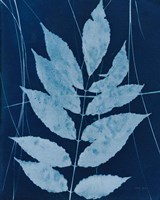 Enchanted Cyanotype IX Framed Print