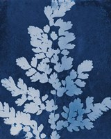 Enchanted Cyanotype VII Fine Art Print