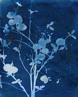 Enchanted Cyanotype VI Fine Art Print