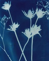 Enchanted Cyanotype I Framed Print