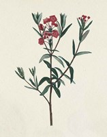 Victorian Garden Flowers II Framed Print