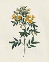 Victorian Garden Flowers I Framed Print