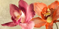 Two Orchids Fine Art Print
