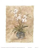 White Orchids I Fine Art Print