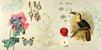 Cabinet of Curiosities II Fine Art Print