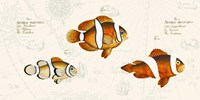 Tropical fish I, After Bloch Fine Art Print