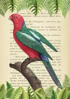 The Australian king parrot, After Levaillant Fine Art Print