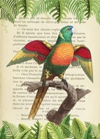 The Blue-Headed Parrot, After Levaillant Fine Art Print