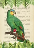 The Orange-Winged Amazon, After Levaillant Fine Art Print