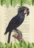 The Palm Cockatoo, After Levaillant Fine Art Print