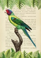 The Plum-Headed Parakeet, After Levaillant Fine Art Print
