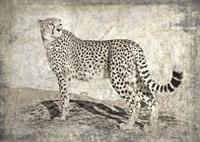Memories of Africa II Fine Art Print
