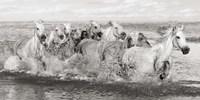 Herd of Horses, Camargue Fine Art Print