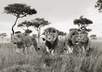 Brothers, Masai Mara, Kenya Fine Art Print