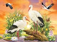 Storks Fine Art Print
