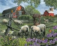 Pleasant Valley Sheep Farm Fine Art Print