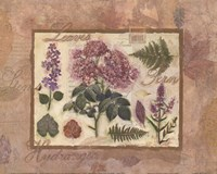 French Hydrangea Collage Fine Art Print