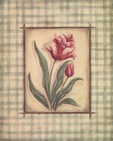 "Gingham Tulip by Kate McRostie - 8"" x 10"" - $10.49"