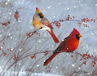 Winter Cardinals Framed Print
