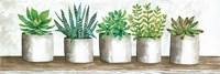 Succulent Pots Fine Art Print