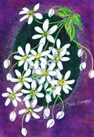Bush Clematis Fine Art Print