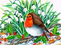 Christmas Robin Fine Art Print