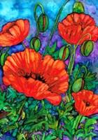 Scarlet Poppies Fine Art Print