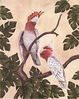 White Mitchell Cockatoos Fine Art Print